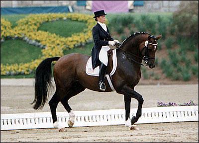 """Résultat de recherche d'images pour """"dressage cheval"""""""
